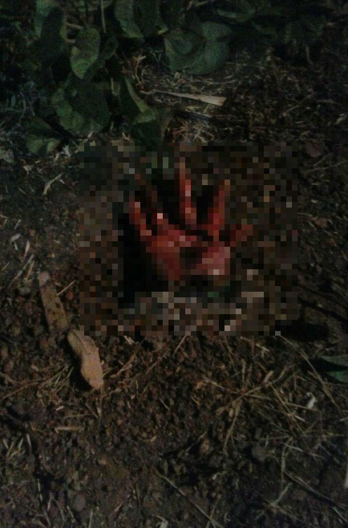 3 Mulher é morta com 16 facadas