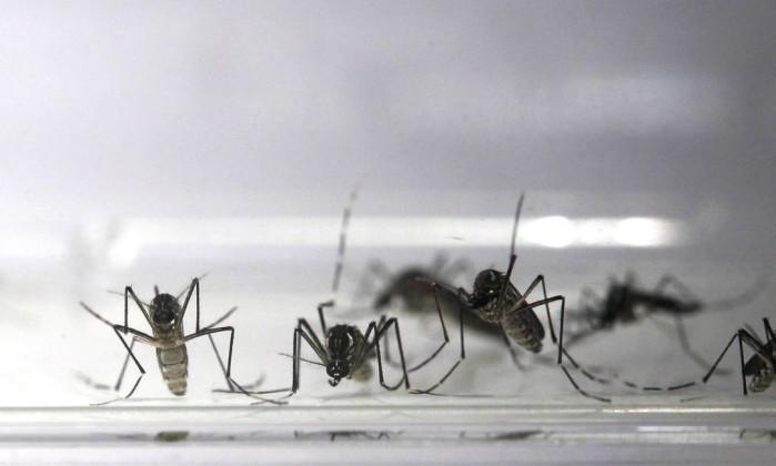 Piauí reduz em mais de 50% os casos de dengue de chikungunya