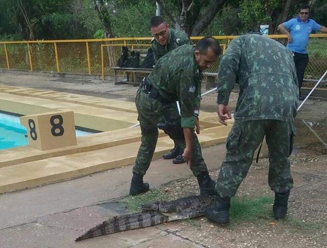 Polícia Ambiental captura jacaré dentro de piscina do setor de esportes da Ufpi