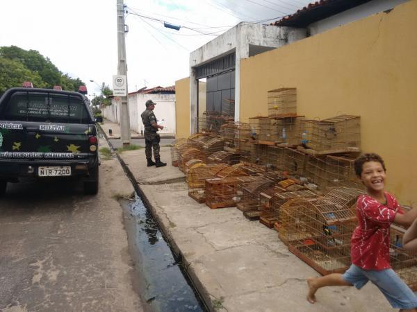 Polícia apreende 76 aves silvestres e homem leva multa de R$ 26 mil