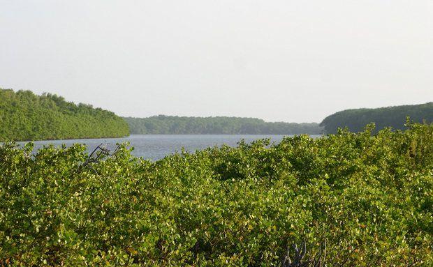 A Ilha do Caju tem mangues, restinga, igarapés, dunas e lagoas