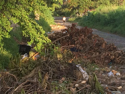 ESCURIDÃO, LIXO E MATO: Moradores da Ruas das Flores reclamam do descaso da Prefeitura de Parnaíba