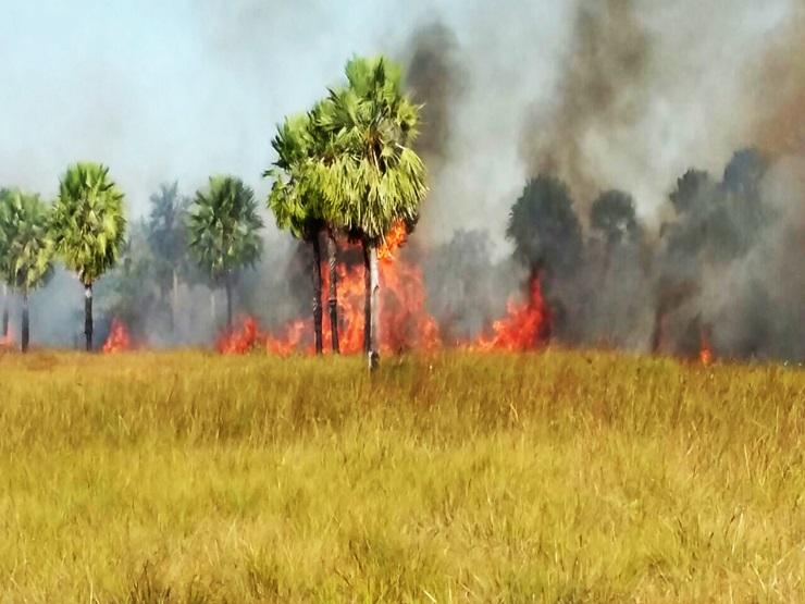 Incêndio atinge três quilômetros de vegetação, em Parnaíba