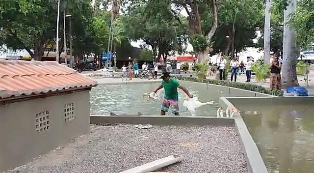 Populares denunciam que aves estão expostas a situações de maus-tratos no lago da Praça da Graça