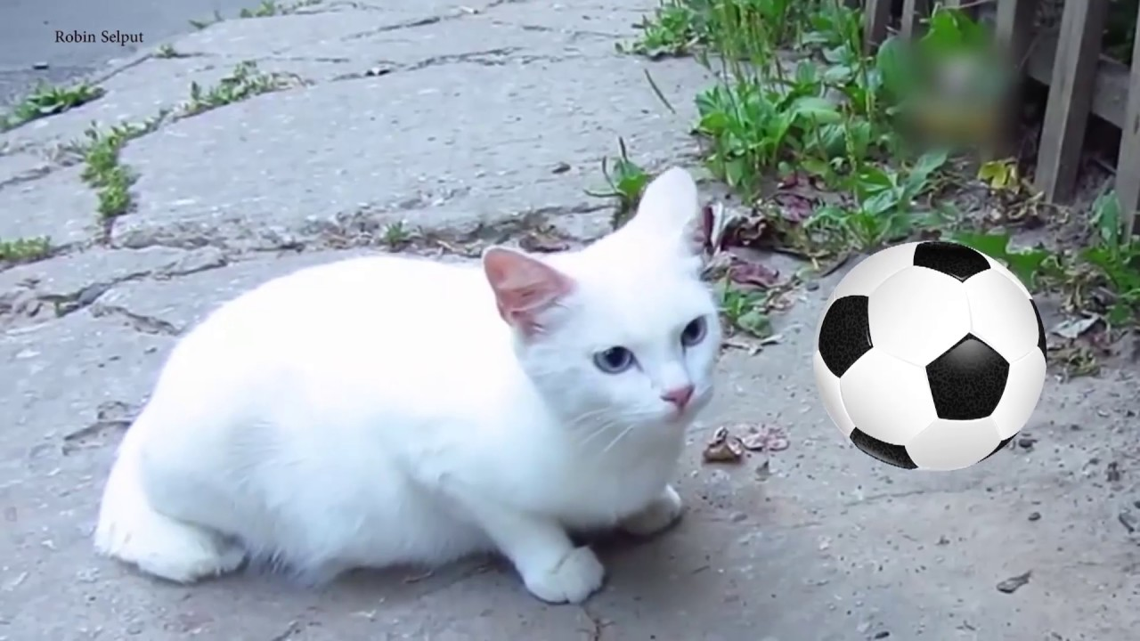 Gato 'vidente' aponta Rússia como a vencedora de jogo de abertura da Copa