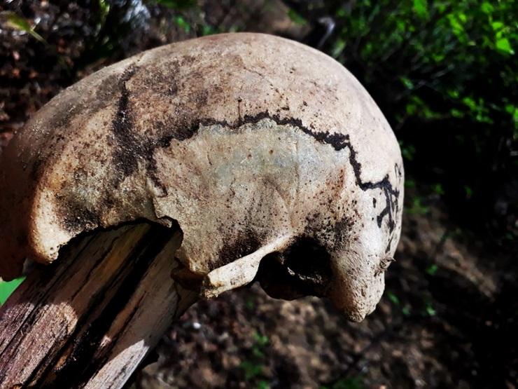Crânio humano é exposto numa cerca na zona rural de Buriti dos Lopes