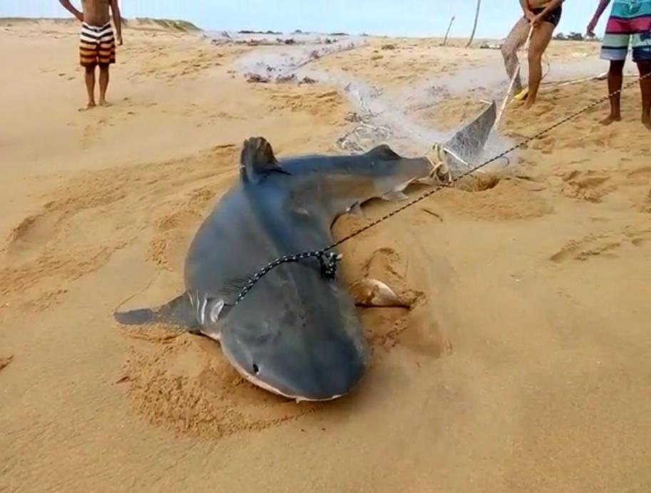 Vídeo de suposto tubarão branco na Pedra do Sal é Fake News