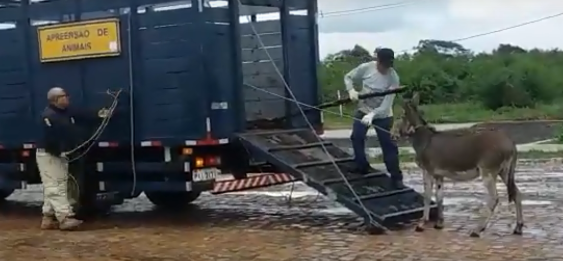 Operação da PRF apreende 103 animais silvestres em rodovias do Piauí