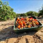 Ambev compra 200 toneladas de caju para produção de cerveja piauiense