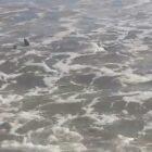 Setur confirma presença de cinco tubarões na Praia do Coqueiro em Luís Correia; veja