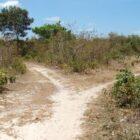 Homem é preso acusado de estuprar sobrinho de 6 anos na zona rural de Bom Princípio do Piauí